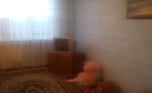 Сдается 2 комнатная квартира 51м2 , 31 комплекс, номер 1010438 - 2